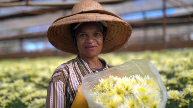florist frau arbeitet im gewächshaus bei holambra, sao paulo, brasilien - brasilianische kultur stock-videos und b-roll-filmmaterial