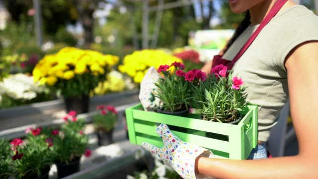Florist woman working in garden center Florist arranging potted flowers in crate plant nursery stock videos & royalty-free footage