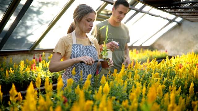 florister vattna blommorna tillsammans och ha kul - blomstermarknad bildbanksvideor och videomaterial från bakom kulisserna