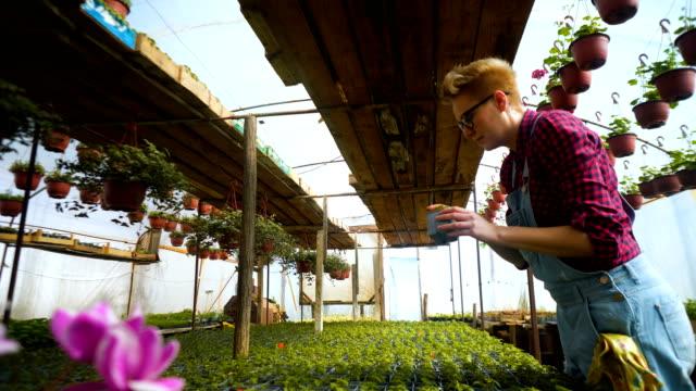 Mujer de floristas trabajan con las flores en un invernadero. Primavera - vídeo
