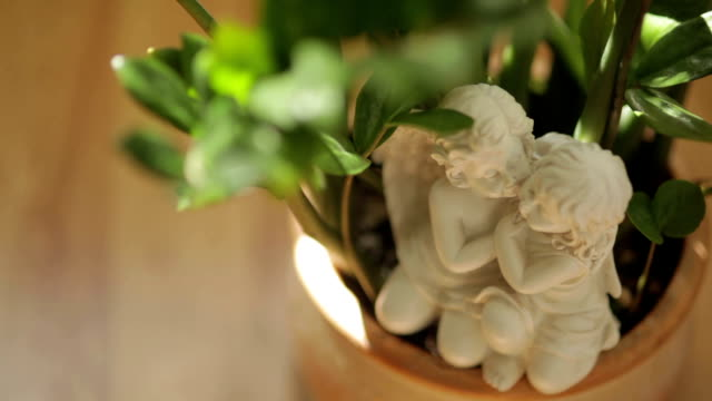 Flovers in vase - Stock footage video