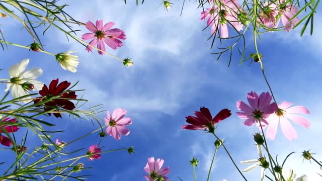 vidéos et rushes de belle fleur contre bleu ciel - vue en contre plongée verticale