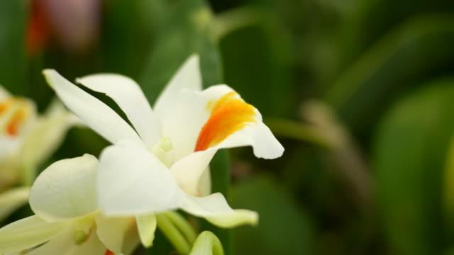 flower background video