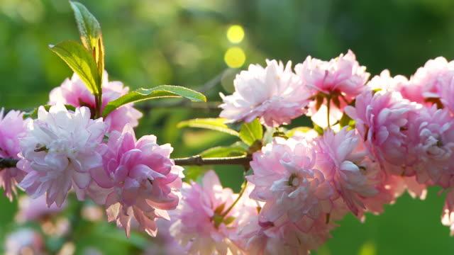 vidéos et rushes de hd dolly: fleur bush - couleur saturée