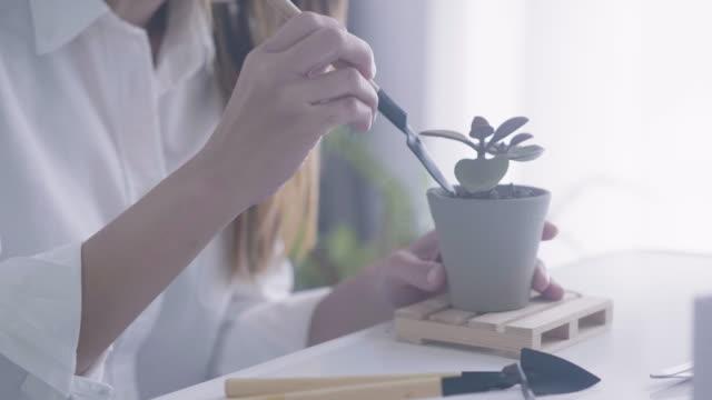 vídeos de stock, filmes e b-roll de decor flor diy no quarto dela - hobbie