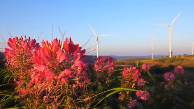 blomfält och naturlig energi, vindkraftverk gård. - generator bildbanksvideor och videomaterial från bakom kulisserna