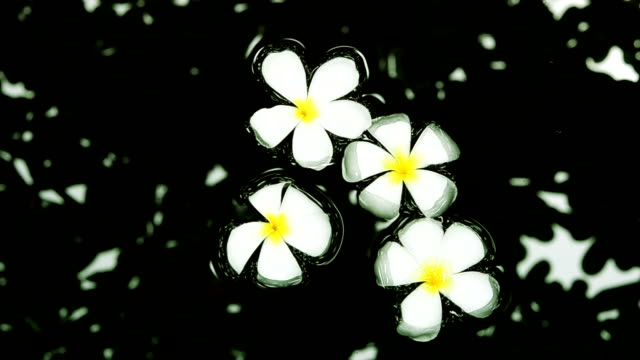 Flower Floating In Water video
