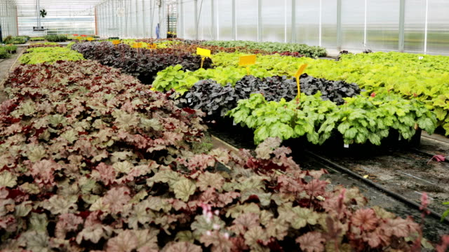 Flower garden - flower greenhouse. Flower shop - sale and cultivation of flowers and house plants. Cultivation Flower garden - flower greenhouse. inside modern greenhouse plant nursery stock videos & royalty-free footage
