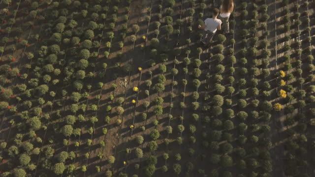 Flower garden from aerial view