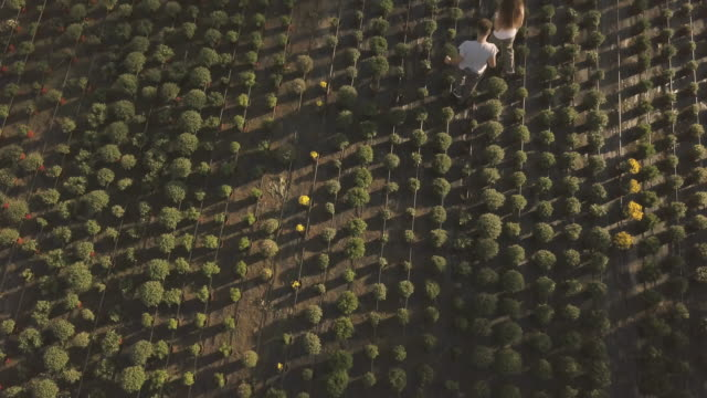 Flower garden from aerial view Aerial view on woman and man florist working in flower farm and potting flowers potted plant stock videos & royalty-free footage