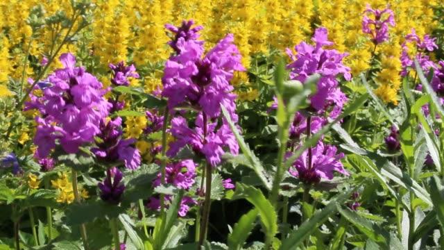 flower garden in the sun - stame video stock e b–roll