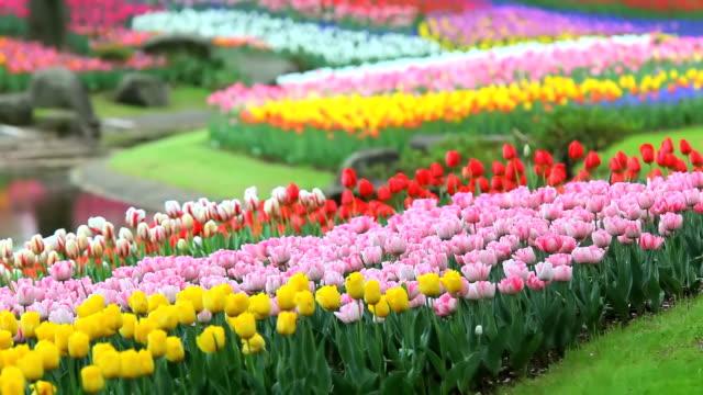 Flower garden video