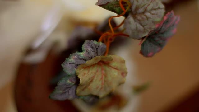 blume leaf - dekorative kunst stock-videos und b-roll-filmmaterial