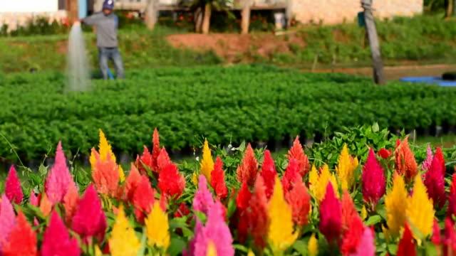 flower market in phurua district, Loei, Thailand