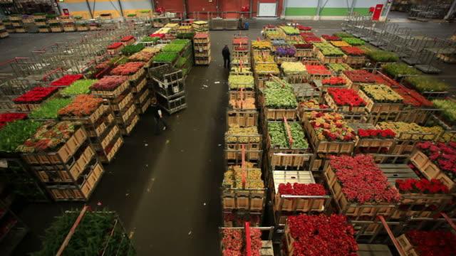 アールスメール花市場 - 花市場点の映像素材/bロール