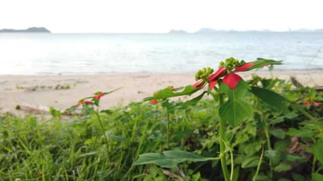 Flower on the tropical beach.