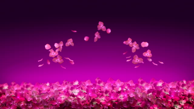 Flower Pink Blossom video