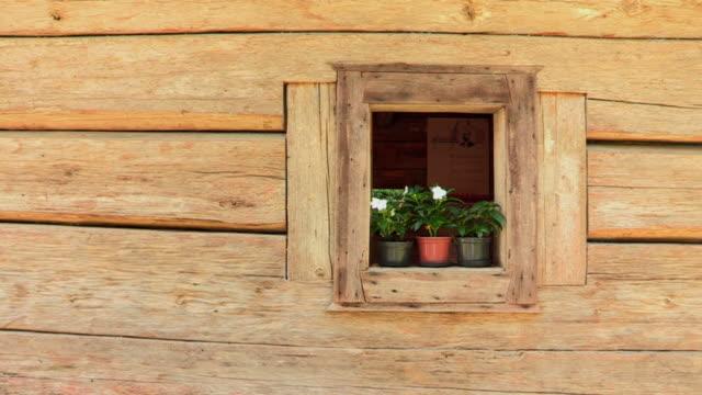 flower pots on balcony window - davanzale video stock e b–roll