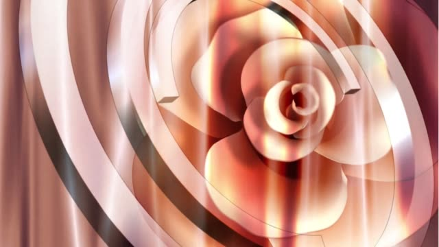 flower rose love romantic video