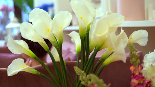 flower shop. flowers close-up. a large variety of plants for gifts video