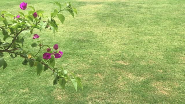 Flor que balanç na grama verde - vídeo