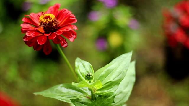 vidéos et rushes de fleur - couleur saturée