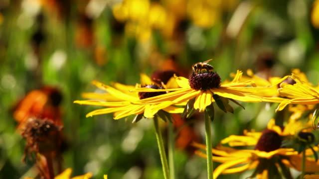 fiore con ape - ape operaia video stock e b–roll