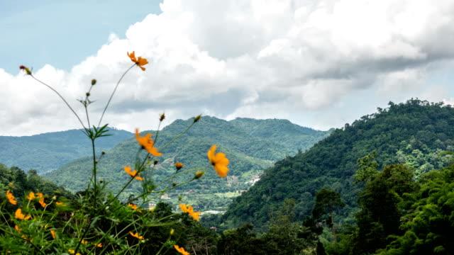山と雲の背景と花します。 - 層積雲点の映像素材/bロール