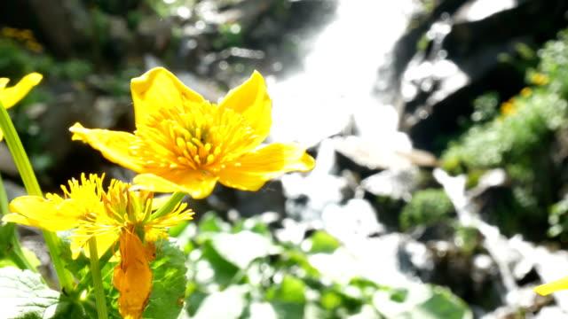 vídeos de stock, filmes e b-roll de cachoeira da flor amarela - rio niagara