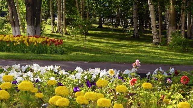 春、夏、美しい自然景観の市内公園でチューリップと黄色のマリーゴールドと花壇 - 花壇点の映像素材/bロール