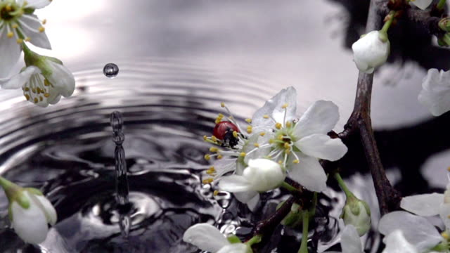 Flowering Branch Above Water video