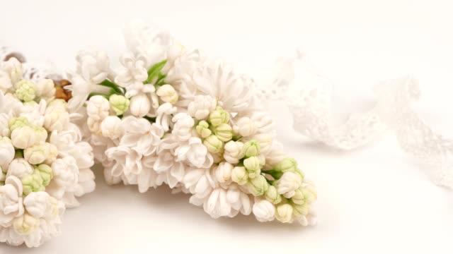 blommande grenar av vit lila och spets på en vit bakgrund. - blomsterarrangemang bildbanksvideor och videomaterial från bakom kulisserna