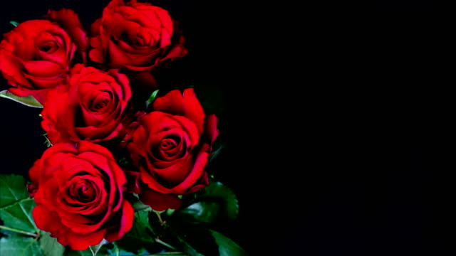 Flowering of roses Flowering of roses bunch stock videos & royalty-free footage