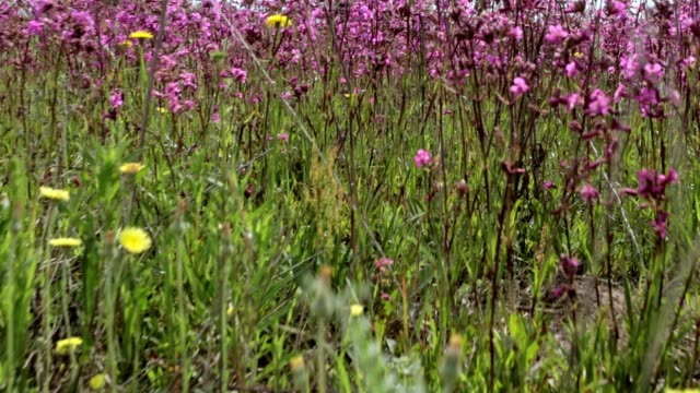 vídeos de stock e filmes b-roll de flowering of wildflowers. - granadilha