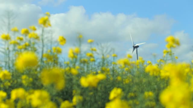blühenden raps feld und windmühlen zur stromerzeugung in frankreich. agrarlandschaft an einem sonnigen tag. umwelt freundlichen stromerzeugung, erneuerbare energie-konzept - elektrischer generator stock-videos und b-roll-filmmaterial