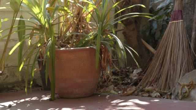 vídeos de stock e filmes b-roll de flowerpot and broom at home - isolated house, exterior