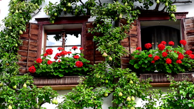 Flowers and bushes standing in pots near colorful houses, nice street in Hallstatt, Austria