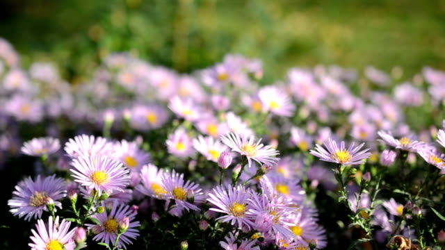 flowers and insects. - stame video stock e b–roll