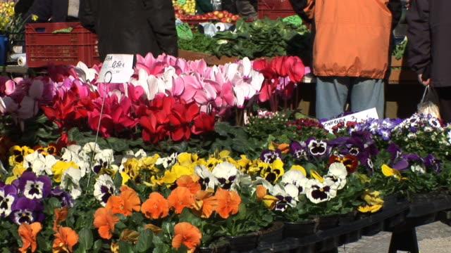 hd: flowers at the market - blomstermarknad bildbanksvideor och videomaterial från bakom kulisserna