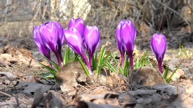 Flowers Bloom In Spring video