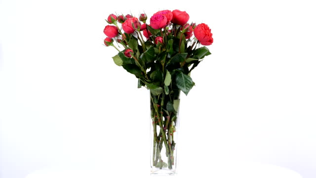 flowers, bouquet, rotation on white background, floral composition consists of roses pion-shaped bordeaux - bouquet video stock e b–roll