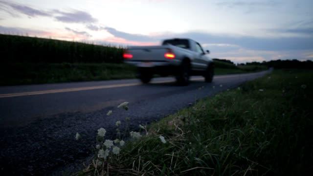 kwiaty przez road - wiejska droga filmów i materiałów b-roll