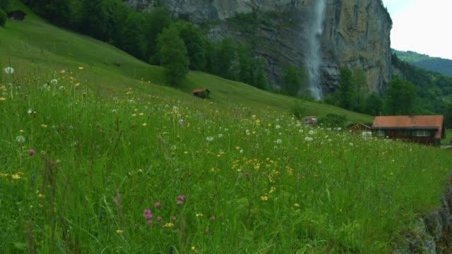 blommor field vattenfall vår tid på lauterbrunen schweiz - wengen bildbanksvideor och videomaterial från bakom kulisserna