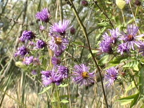 impollinazione fiori guida - stame video stock e b–roll