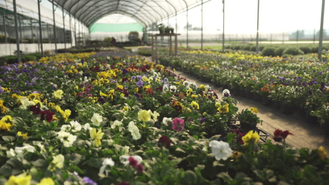 Flowers in a greenhouse Flowers in a greenhouse at a garden center plant nursery stock videos & royalty-free footage