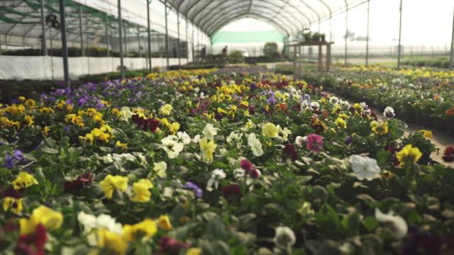 Bloemen in een kas video