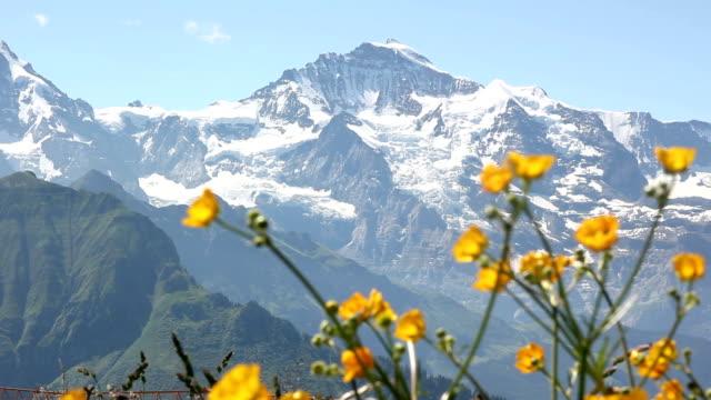 flowers in front of mountain - hd & pal - grindelwald bildbanksvideor och videomaterial från bakom kulisserna