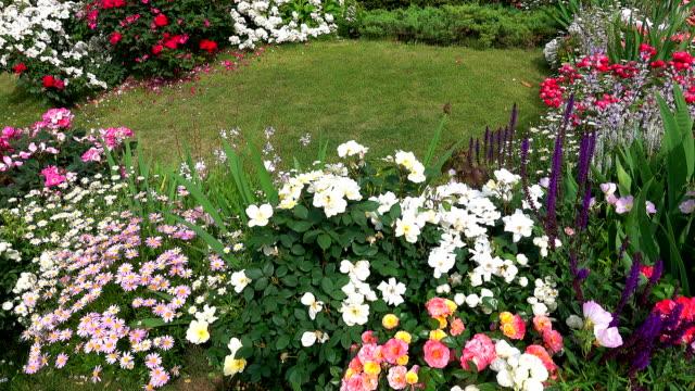 Flowers in garden with bidrs Flowers in garden with bidrs flowerbed stock videos & royalty-free footage