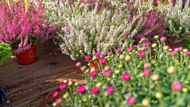 blommor i växthus - blomsterarrangemang bildbanksvideor och videomaterial från bakom kulisserna