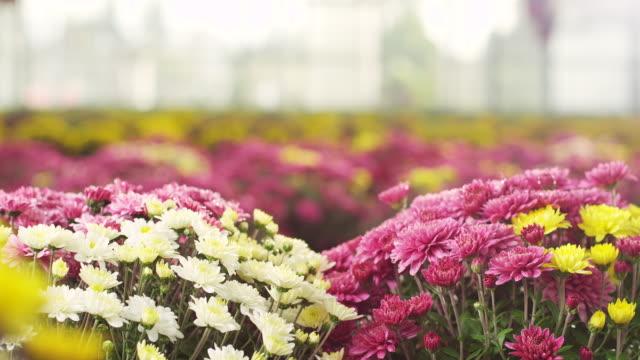 stockvideo's en b-roll-footage met bloemen in kas - floral line